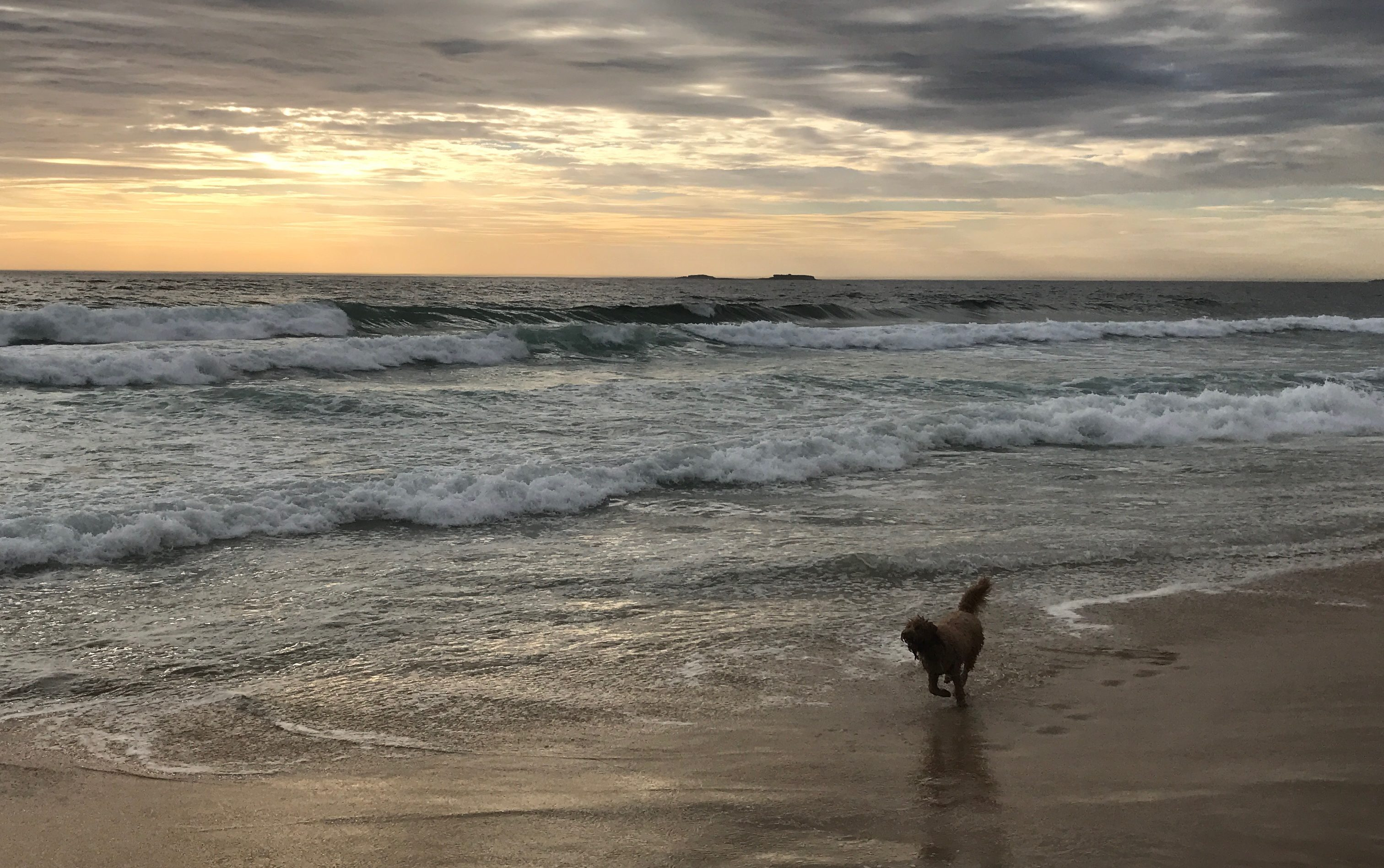 Bailey's Story – Lessons from the Dog Beach